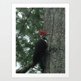 Woody Woodpecker Art Print