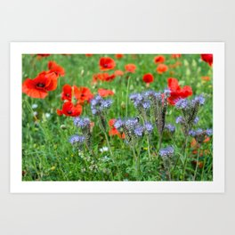 Summer Wild Flowers - 2 Art Print