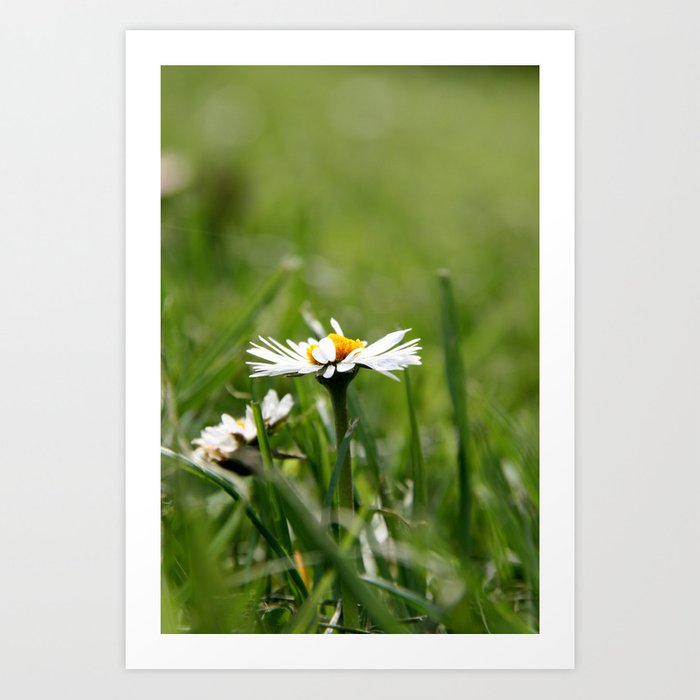 Little Daisy  Art Print