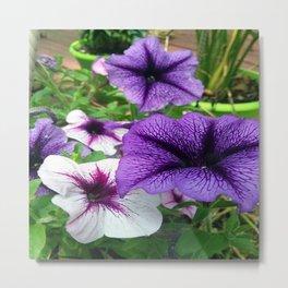 purple bundle Metal Print