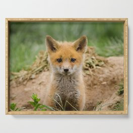 Coming Out Baby Red Fox Pup Wildlife Photograph Serving Tray