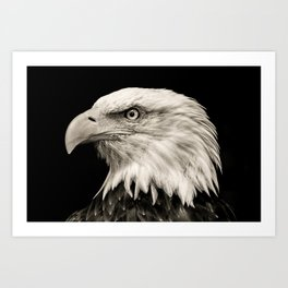 American Eagle Photography   Bird   Art Print
