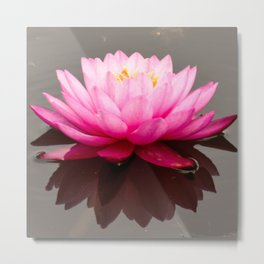 Pink lily bloom reflected Metal Print