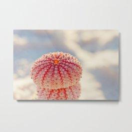 Pink Sea Urchins Metal Print