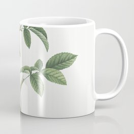 Stapelia French rose variety Rosa gallica stapelice flora from Les Roses (1817-1824) by Pierre-Josep Coffee Mug
