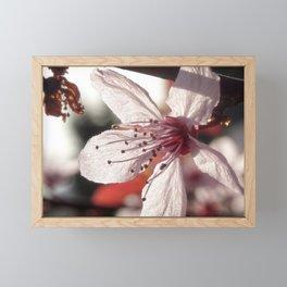 Flowering Plum Framed Mini Art Print