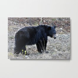 Black Bear mom Metal Print