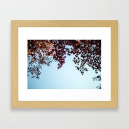 Japanese Maple Leaves in Autumn Framed Art Print