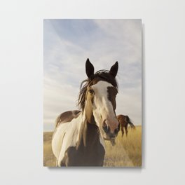 Western Paint Horse Metal Print