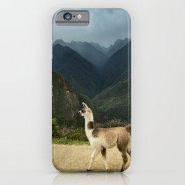 Llama in Peru Photography in Hd iPhone Case
