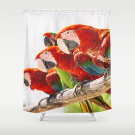 Red macaws Shower Curtain