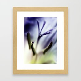 Freesia flowers Framed Art Print