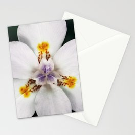 Blanca Stationery Cards