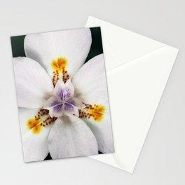 Blanca Stationery Cards