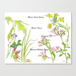 Chatham Spring Morris Island Canvas Print
