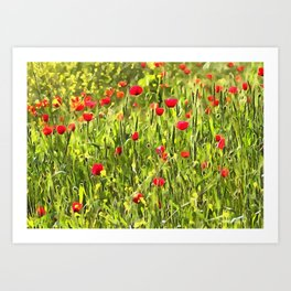 Flanders Poppies Art Print