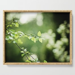Green Nature Leaf Photography, Tree Branch, Dark Green Leaves Art, Botanical Branches Photo Serving Tray