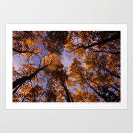 Tree Canopy Art Print