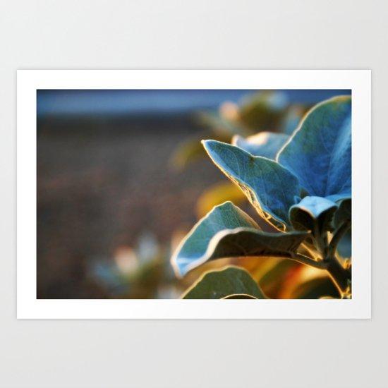 Desert Leaves Art Print
