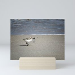 Sandpiper With Dragonfly Mini Art Print