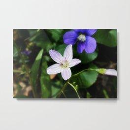 Spring Beauty 11 Metal Print