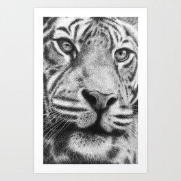 Wildlife Tiger Portrait Art Print