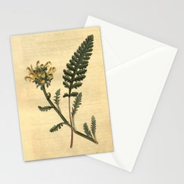 Flower 2506 pedicularis canadensis Canadian Louse wort10 Stationery Cards