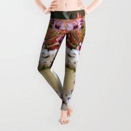 Protea arrangement Leggings