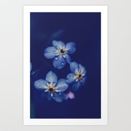 For-get-me-not Art Print