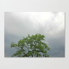 Lonely As A Tree Canvas Print