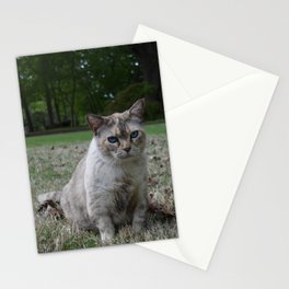 Clawdia cat Stationery Cards