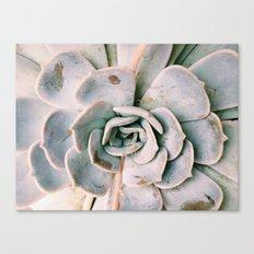 Succulent Petals Canvas Print