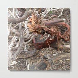 TEXTURES - Manzanita Drought Conditions #4 Metal Print