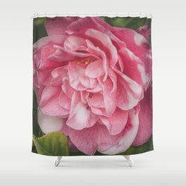 Pink Dream, Rose Photography, Rose Art, Nature Photography, Flower Print, Floral Print, Nature Print Shower Curtain