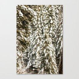 Snowy Trees Photography Print Canvas Print