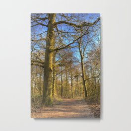 The Forest Path in Springtime Metal Print