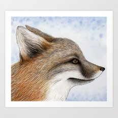 Grey Fox Art Print