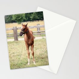 Little Horse Stationery Cards