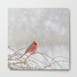 Cardinal in Snowstorm Metal Print