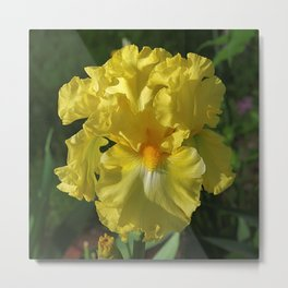 Golden Iris flower - 'Power of One' Metal Print