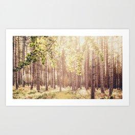Spring Forest Art Print
