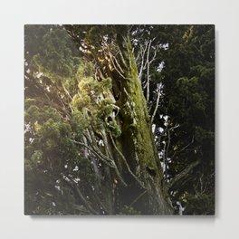 Nature #10 Metal Print