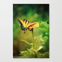 Yellow Swallowtail Butterfly on Zinnia Canvas Print