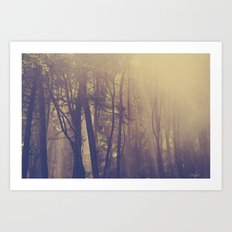 Sunbeams in the Forest Art Print