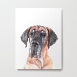 Great Dane Portrait Metal Print