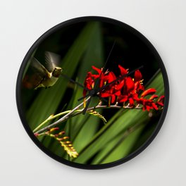 Rufous Hummingbird 2 Wall Clock