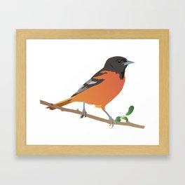 Baltimore Oriole Bird Framed Art Print