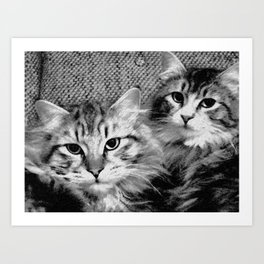 always start with cats Art Print