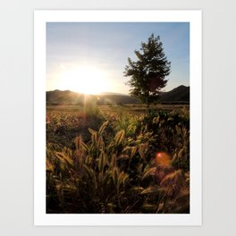 Morning Glow Art Print