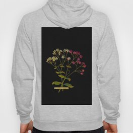 Silene Armeria Mary Delany Floral Paper Collage Delicate Vintage Flowers Hoody